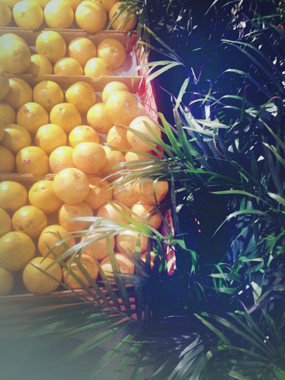 Palms and oranges